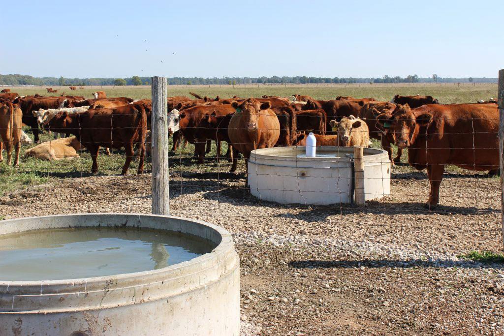 De nouveaux systèmes d'abreuvement pour bovins en pâturage.